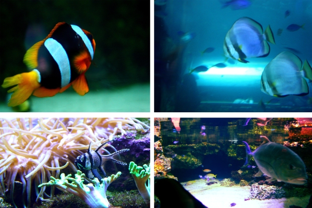 Finding Nemo at Sydney Aquarium Return to Aus
